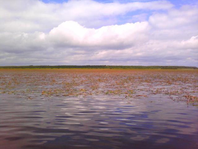 Вот так выглядит типичный водоем в июле - трава начинает заполонять всю поверхность водоема.