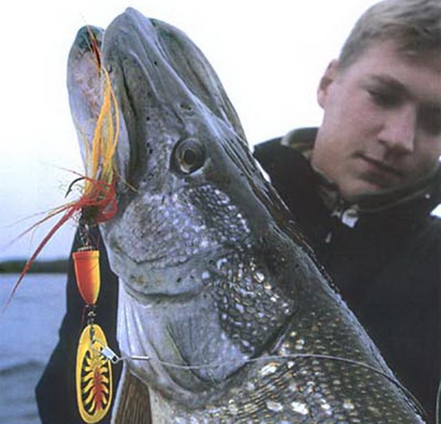 На крупные вертушки с опушкой или силиконом можно ловить крупную щуку в октябре на спиннинг.