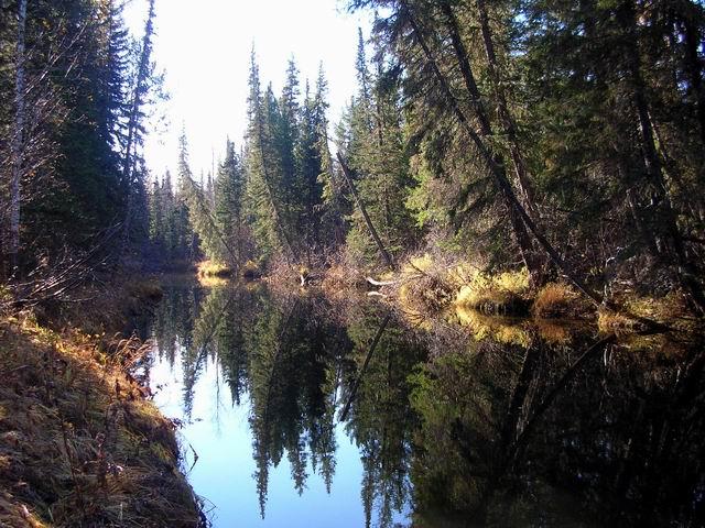 Где-то там, в глубине таёжной реки, найдут своих трофеев вращающиеся блёсны на щуку.