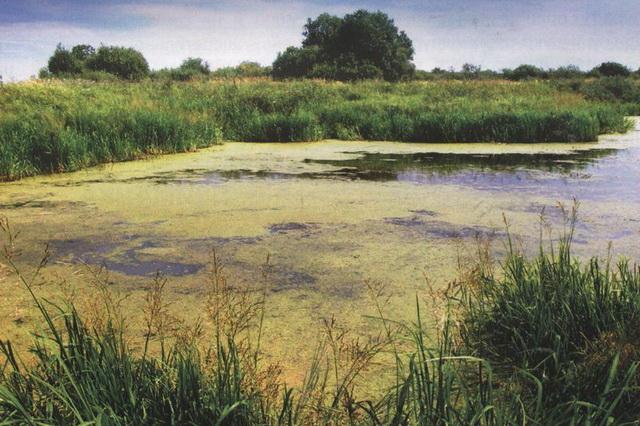 Трава на водоеме бывает разная, где-то можно ловить на воблер, а где-то даже хорватское яйцо вязнет.