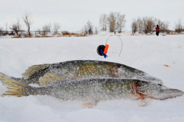 Рыбалка на щуку в декабре 1