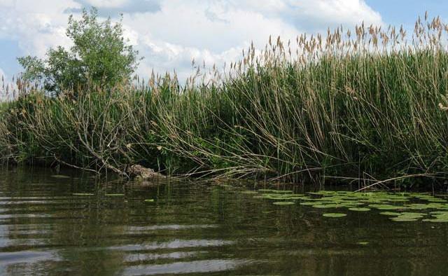 Глубина у зарослей травы - гарантированная поклевка хорошей щуки.