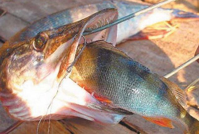 в какое время ловить рыбу на речке