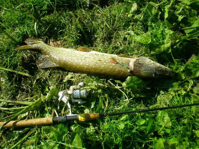 В начале осени можно начинать ловить щуку с плотины пруда на джиг, колебалки и огруженные вертушки.