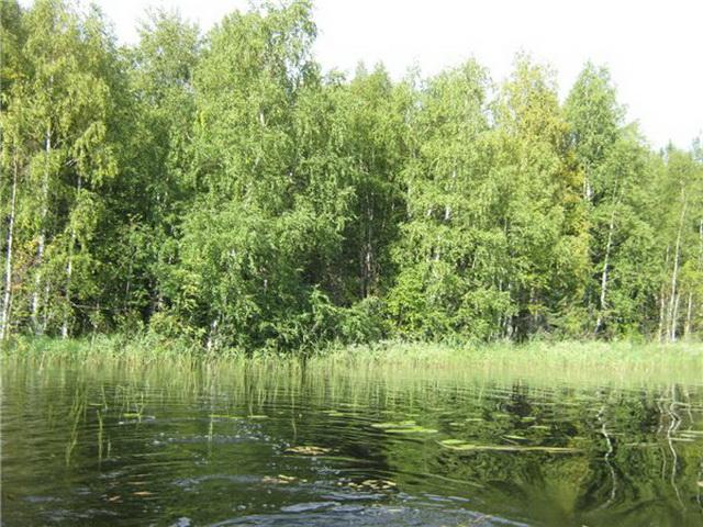 На заросших поливах вдоль берегов пруда охотятся небольшие щуки.