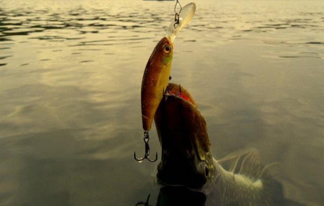 в какое время лучше клюет рыба
