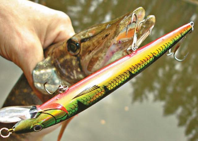 какая рыба сейчас клюет на реке